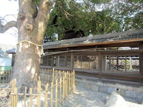 柳沢神社御神木と本殿