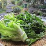 祝雷とアスパラ菜