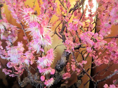 盆梅展の春の息吹