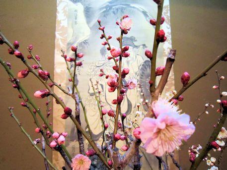 盆梅展の掛軸