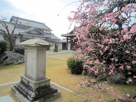 永慶寺の梅