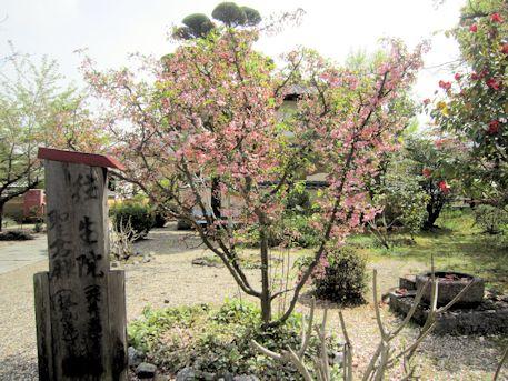 橘寺境内の花