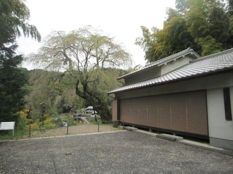 今井谷集会所と八講桜