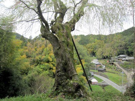 八講桜からの景色