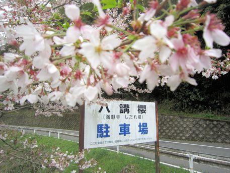 八講桜の駐車場