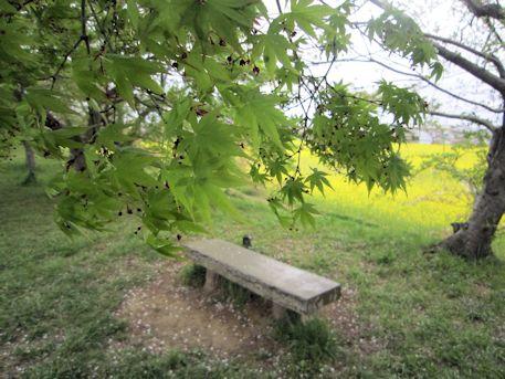 醍醐池脇のベンチ