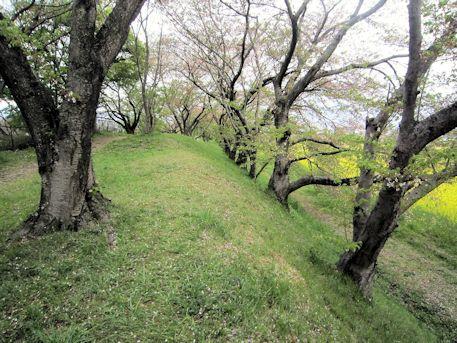 醍醐池畔の桜並木