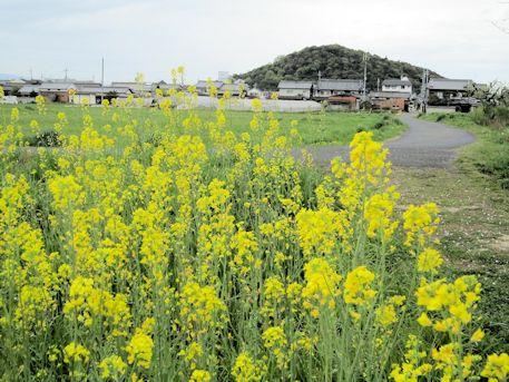 耳成山と菜の花