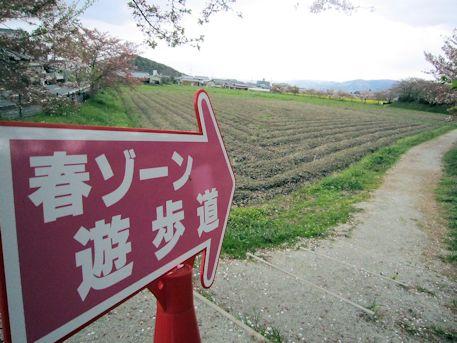 春ゾーン遊歩道