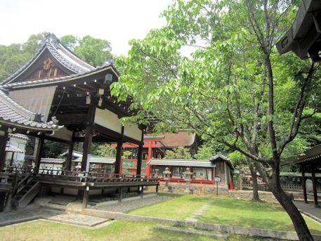 氷室神社の奈良の八重桜