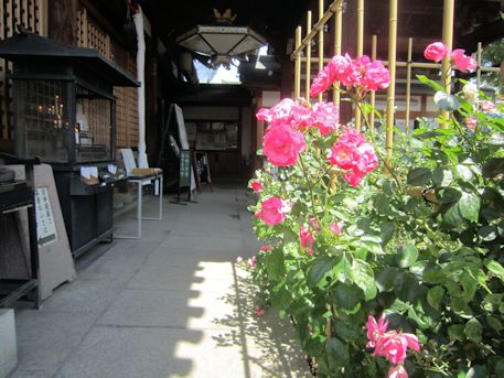 おふさ観音本堂前のバラ