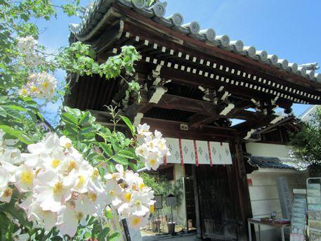 おふさ観音山門前の花