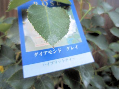薔薇ダイアモンドグレイの名札