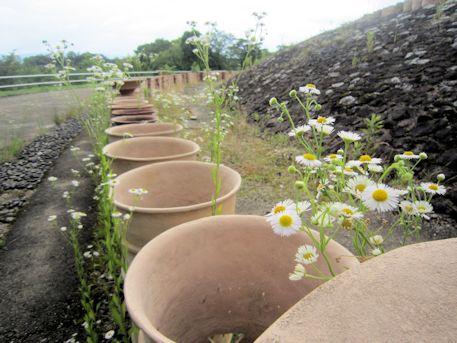 ナガレ山古墳の円筒埴輪