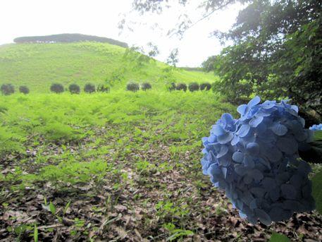 馬見丘陵公園の紫陽花とナガレ山古墳