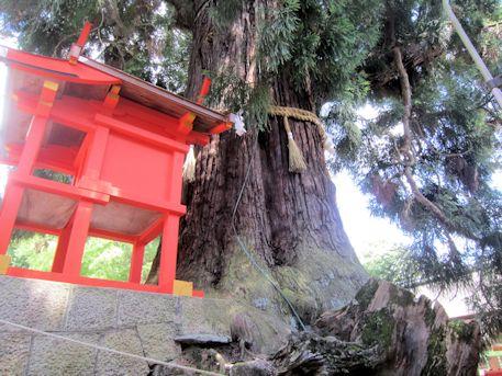 大杉と岩本神社