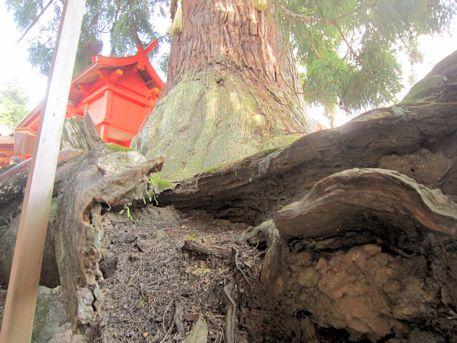 大杉の根元