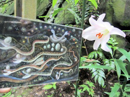 『蛇の神様と卵』とささゆり
