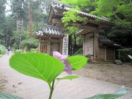 紫陽花と談山神社東大門