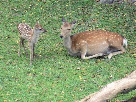 母鹿と子鹿