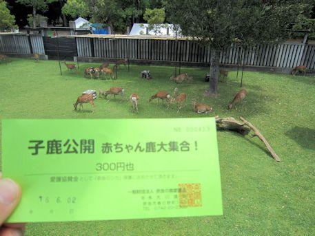 子鹿公開チケット