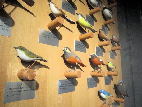 公園館の野鳥展示