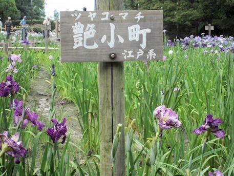 江戸系の艶小町