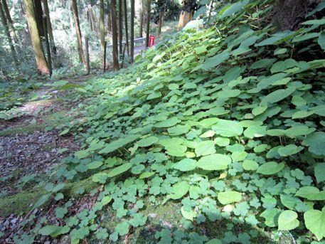 地蔵菩薩周囲の植物