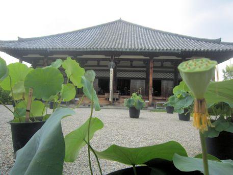元興寺極楽坊と蓮