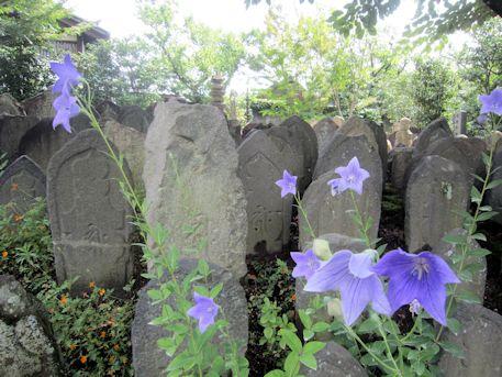 元興寺石仏と桔梗