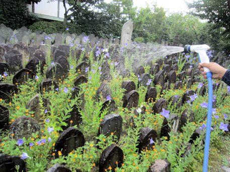 元興寺の菌散布