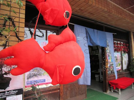 大和郡山の金魚