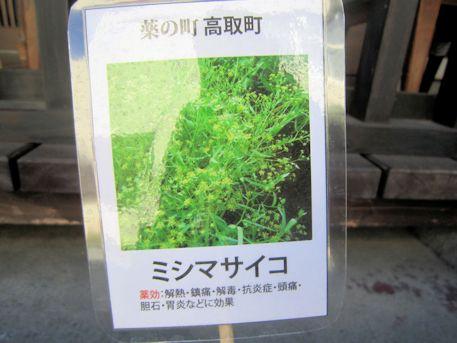 薬草のミシマサイコ