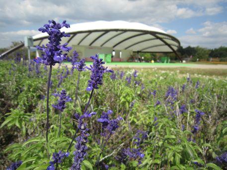 馬見丘陵公園の大型テント