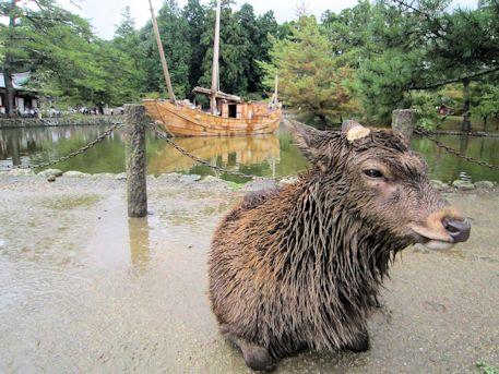 奈良の鹿と船