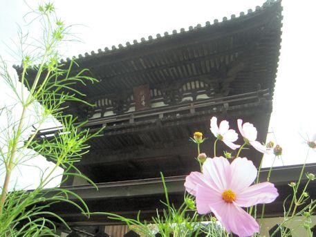 般若寺楼門とコスモス