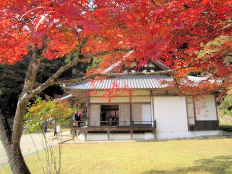 正暦寺本堂と紅葉