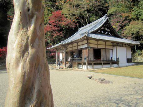 正暦寺本堂と百日紅