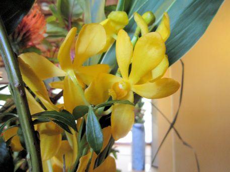 五弁花のモカラ