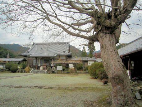ハナノキと世尊寺本堂