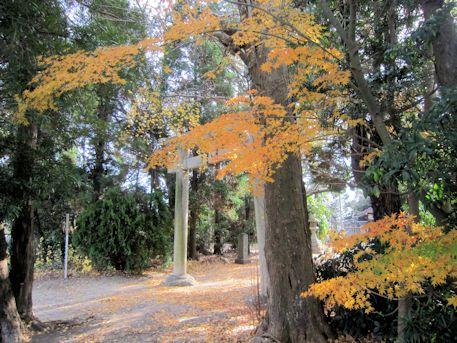 鏡作伊多神社の黄葉