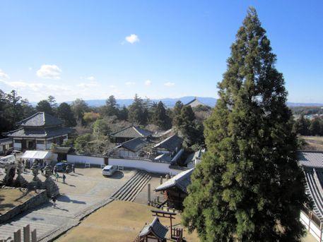 東大寺開山堂と良弁杉