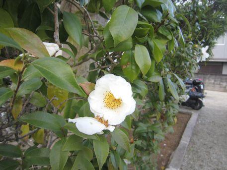 国分寺境内に開花する花