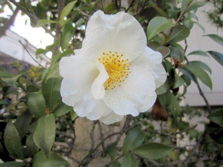 国分寺収蔵庫横の花