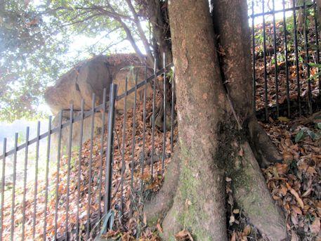 小谷古墳の鉄柵