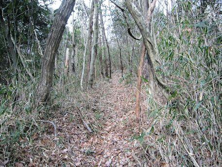 舞谷2号墳へ続く藪道