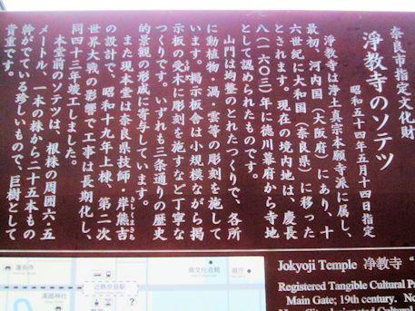 浄教寺のソテツ