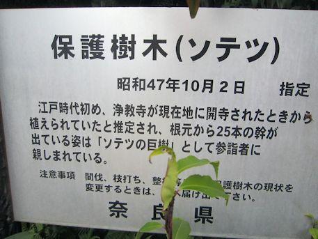 保護樹木ソテツ