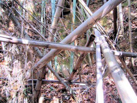 立子塚古墳の倒木