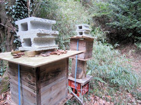 ミツバチの巣箱と開口部付近